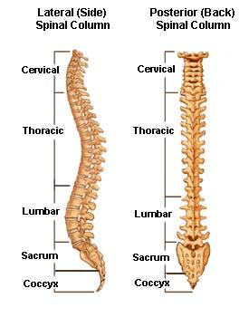 spine3-BB