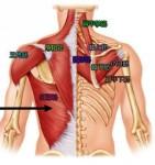 肩の筋肉達