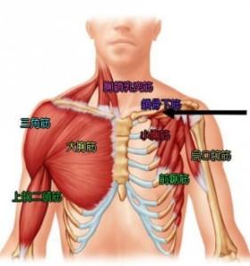 肩の筋肉達22