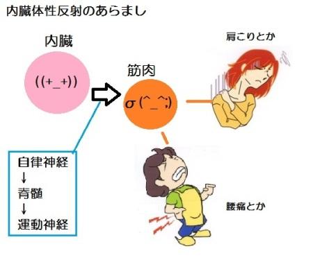 内臓体性反射
