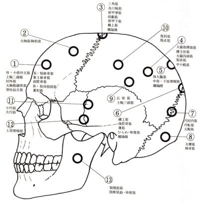 神経血管反射区