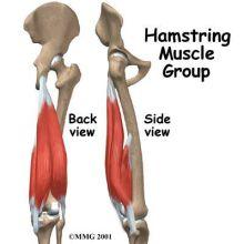 股関節筋3