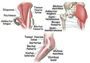 股関節筋6