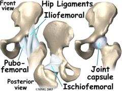 股関節靭帯
