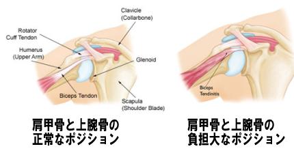 肩甲骨と骨頭2