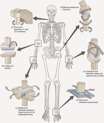 関節のタイプ